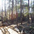 山と森と林業の話し